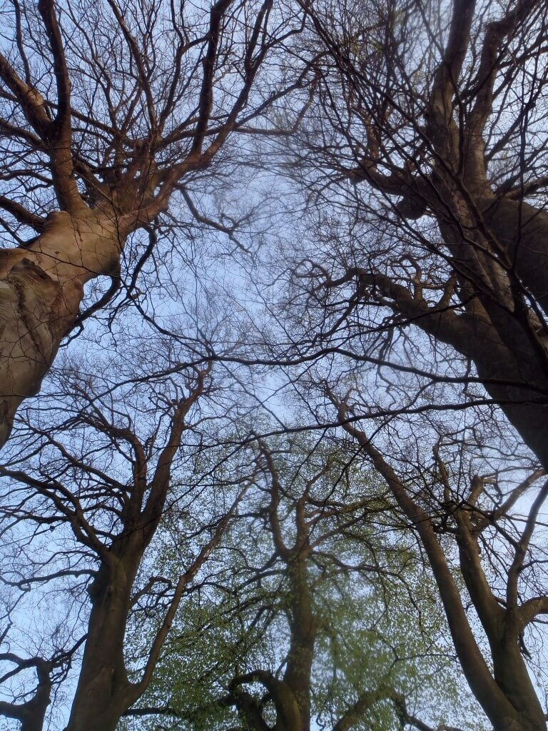 Ecotherapy: blue sky thinking